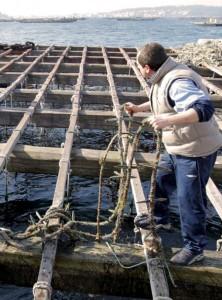 Biosensores contra la marea roja de las bateas de mejillones en las costas gallegas. EL MUNDO